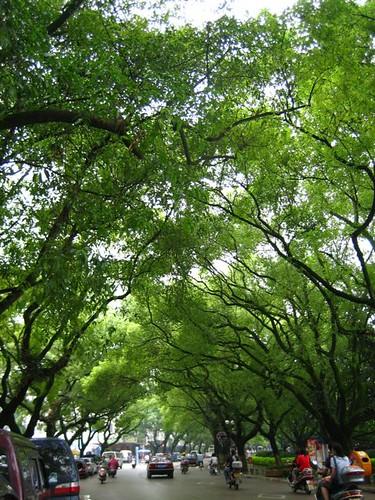 ถนนหนทาง ชอบต้นไม้ครึ้มๆแบบนี้ ที่นี่ต้นไม้สวยจิงๆ ต้นไทรต้นหลิวมากมาย