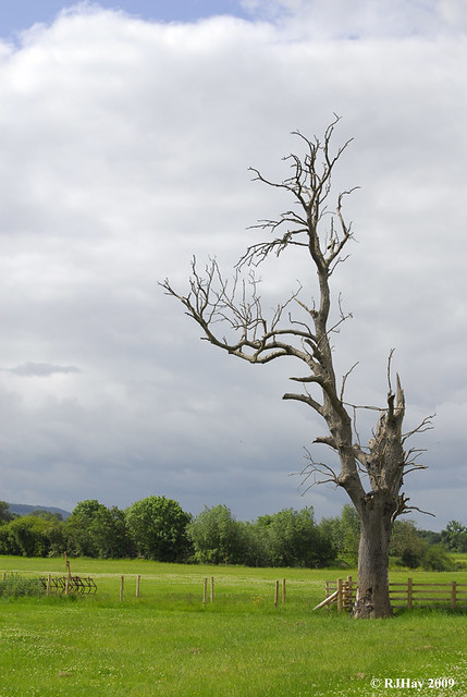 A Lonely tree - All its leaves left.