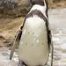 Woodland Park Zoo Seattle 062