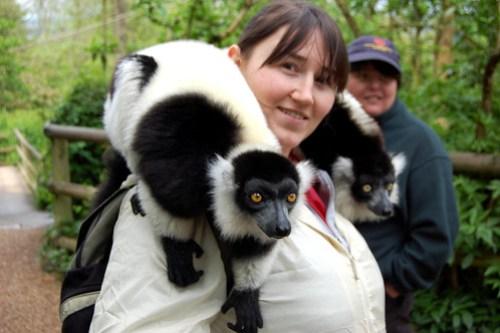 Lemurs (Taken by James)