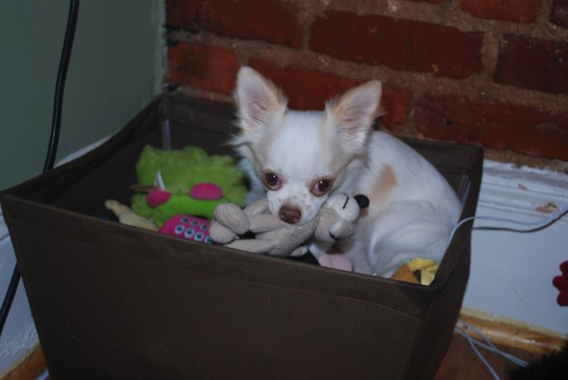 Yeah. Hes in the toy box.
