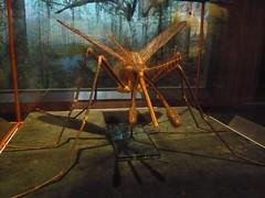 dramatized Malaria Mosquito