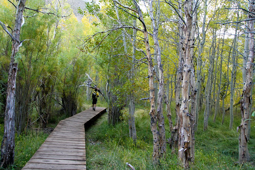Walking the boardwalk around Convict Lake