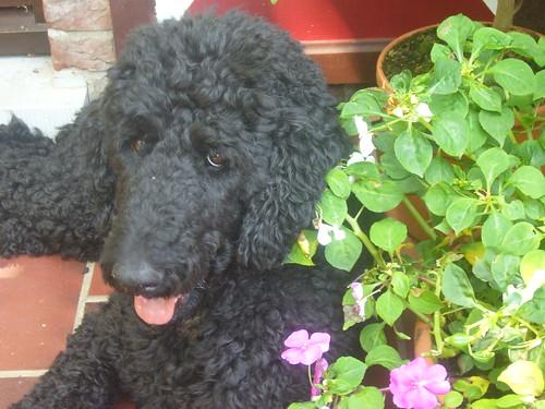 Yankee bij bloemetjes