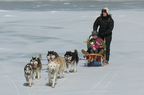 Mushing at DAR