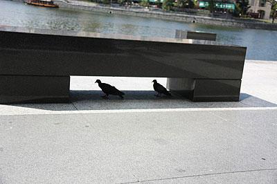 Hiding under a bench