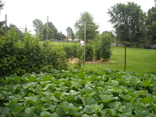 View from the Butternut Squash patch