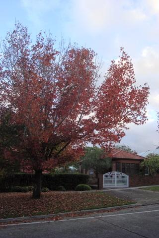 Autumn walk2