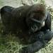 Woodland Park Zoo Seattle 023