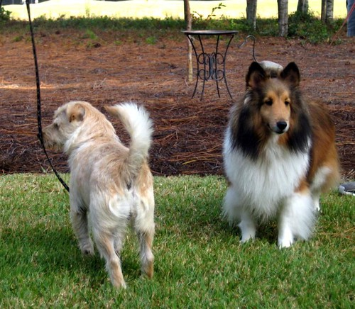 Impossible to get both dogs facing the same direction
