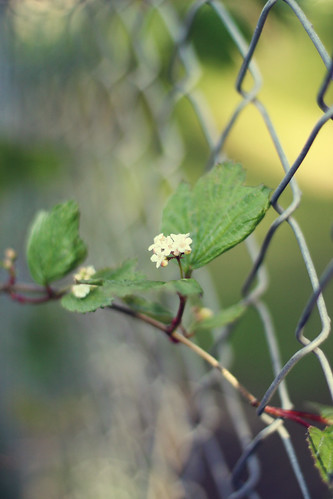 through the fence (by Leaca's Philosophy)