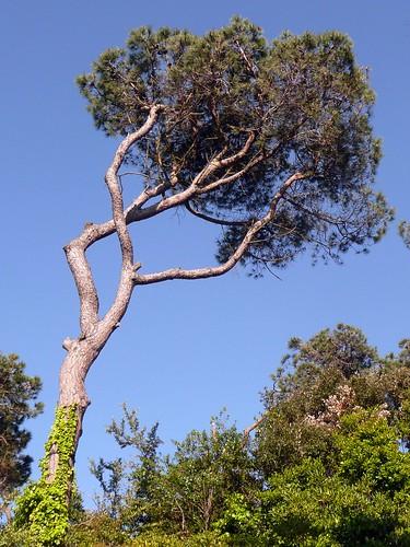 Pom Pom Girl in a tree