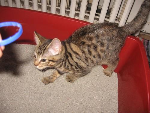 girl kitten 9