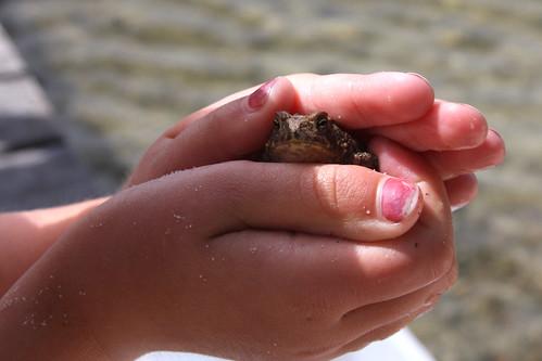 Pet Toad