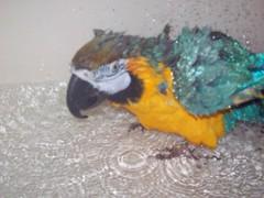Elvis in the bathtub
