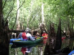 Swamp paddling
