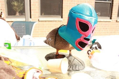 Duck Luchador