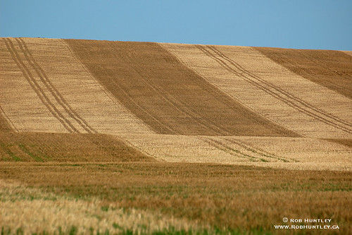 Patterned wheat field