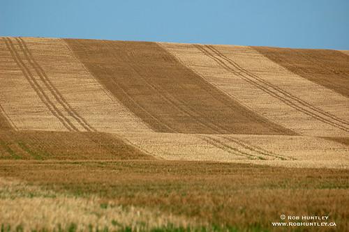 Patterned wheat field