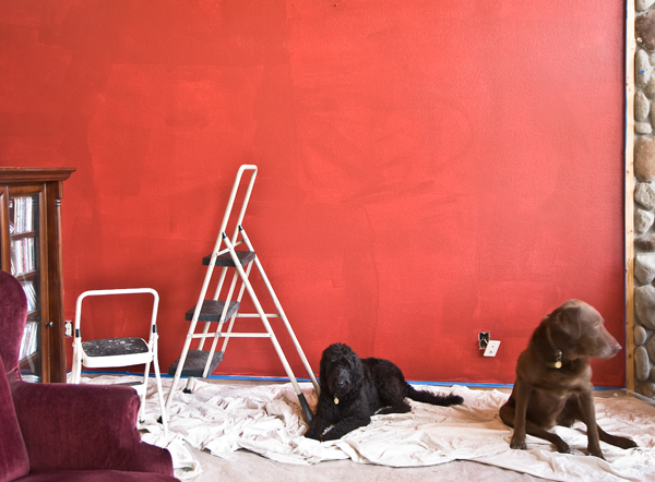 the evolution of a red wall