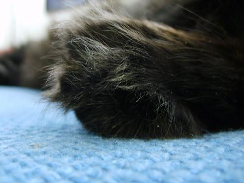 paw_closeup2