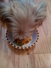 Dixie's most thankful for ... green beans!