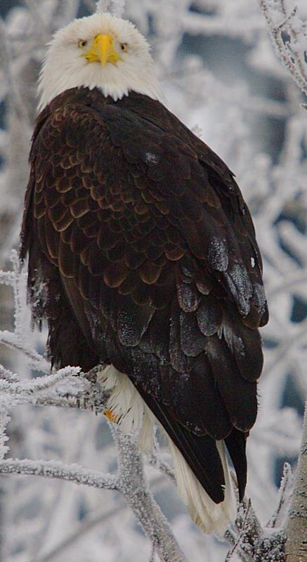 IMGP7013 ac Eagle Eyes