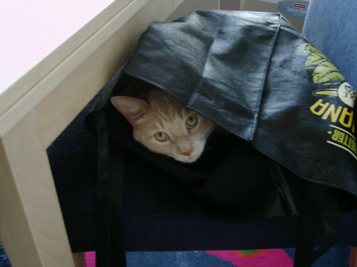 Fezzik in a bag