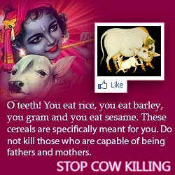 Stop Cow Killing