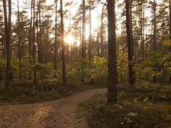 German Woods