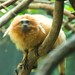 Woodland Park Zoo Seattle 009