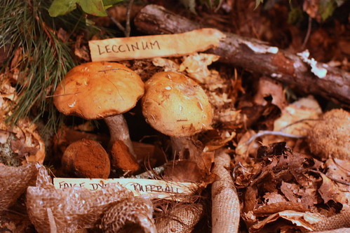 "NJ Mycological Association ""Fungus Fest"" by you."