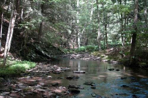 Shaded Maryland Creek