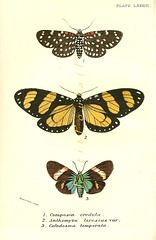 the estate of things chooses vintage jamaica moth print