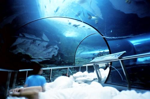 [海洋之夜]Sleep under the sea