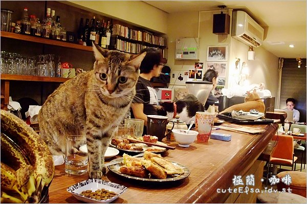 【臺北泰順街】極簡咖啡.師大下午茶。貓咪的幸福窩(圖多) @ 愛小莎@生活五四三 :: 痞客邦