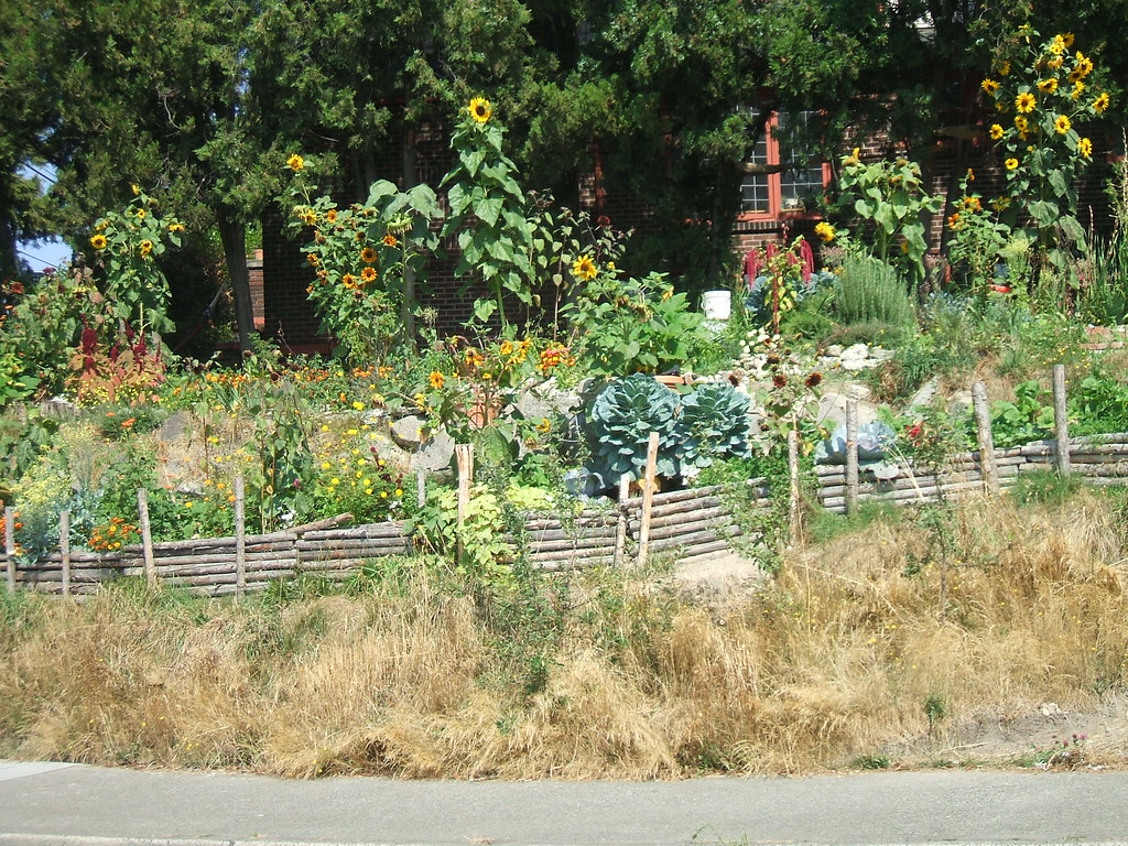 Seattle urban garden
