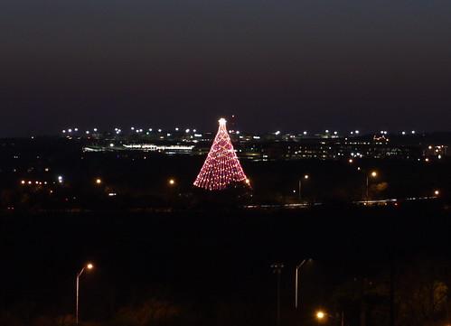 Zilker tree, Austin