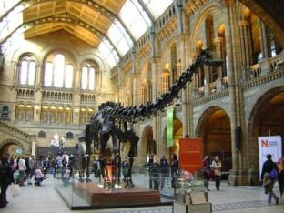 Dinosauro Natural History Museum Londra