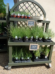 Herbs for sale  009
