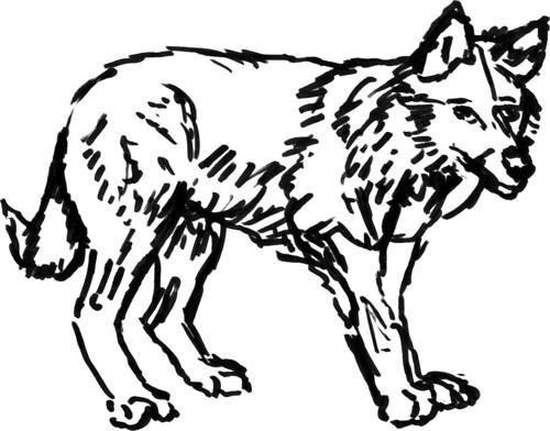Wolves, part 6