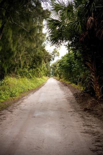 Jungle_Trail
