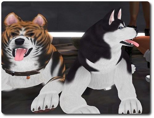 Dogs (Vix & Scratch)