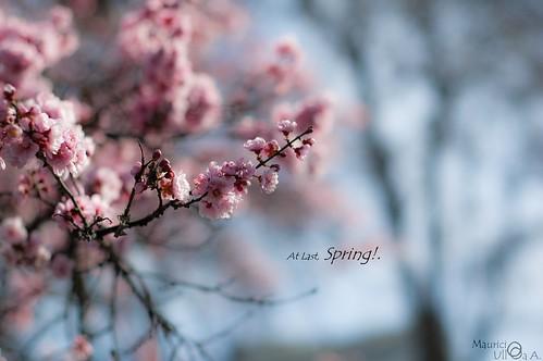 At Last, Spring!.