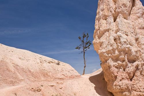 Lone Tree on White Stone