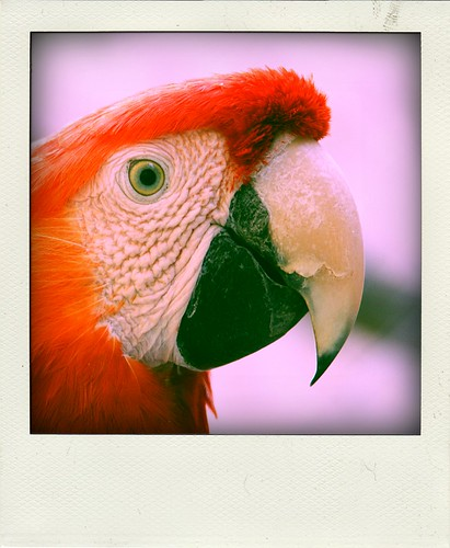 Parrot's smile