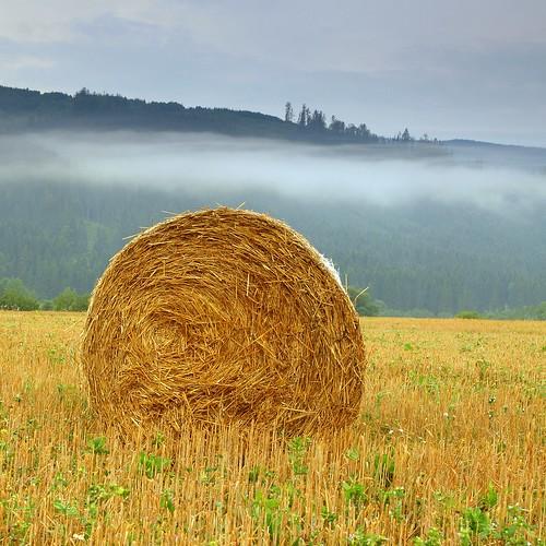 Harvest Blanket by Martin Sojka