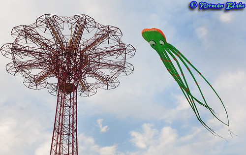 Octopus Spotted in Coney Island © 2009 Norman Blake by NB Photo Flash via flickr. All rights reserved