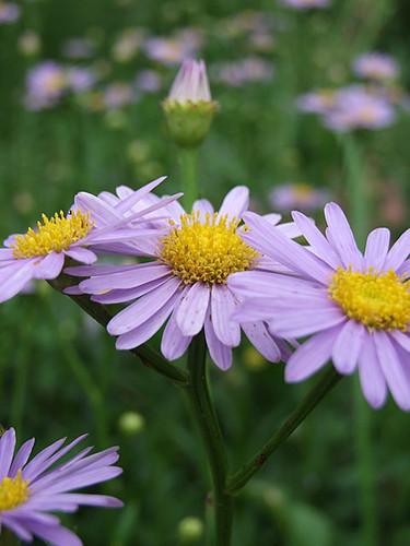 花と虫達~笹川流れ