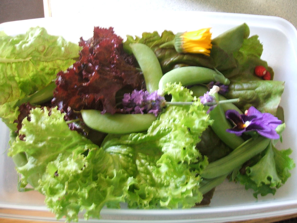 Summer salad from the garden